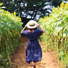 夏/ひまわり/旅 神奈川県 座間市 夏のひまわり畑はあっと…