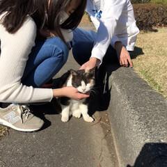 野良ちゃん/野良猫/猫/春の一枚 今朝初島で出会ったノラさん とても人なつ…