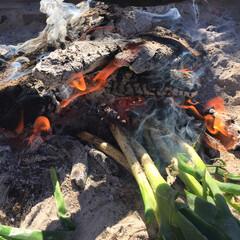 ネギ焼き/ネギ/ごはん 娘からのリクエストでネギ焼き 焚き火に泥…