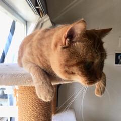 LIMIAペット同好会/にゃんこ同好会 妹猫の定位置を陣取る兄猫🙄