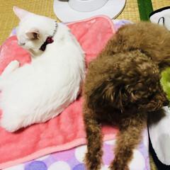 ネット通販/フォロー大歓迎/ペット/ペット仲間募集/犬/猫/... ピンクは猫さんのベット。 緑のブランケッ…