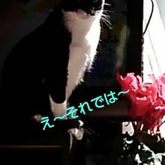 にゃんこ同好会/猫のいる生活/ねこ 日曜日、皆でテレビを見ていたら 突然ニュ…(5枚目)