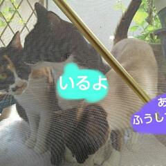 猫のいる生活 アルト達がくつろいでる頃 我が家の3にゃ…