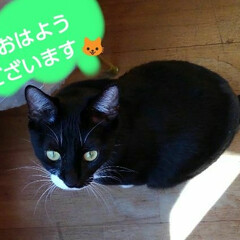 にゃんこ同好会/白黒猫/にゃんこ日めくり おはようございます🐱 2月1日 土曜日の…