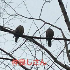 風景 昨日の寒い午後見かけた仲良しカップル も…