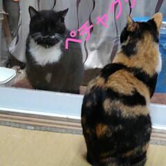 猫のいる暮らし/ねこ/にゃんこ同好会 朝の沙羅ちゃんとサムト君の会話 おしゃべ…(4枚目)