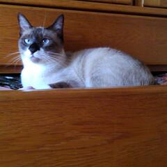 猫/LIMIAペット同好会/にゃんこ同好会/夏のお気に入り/写真 今日も暑い一日です 瑠月は私の片付けのお…(1枚目)