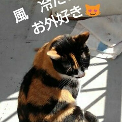 ご挨拶/三毛猫/にゃんこ同好会/フォロー大歓迎 おはようございます🐱 1月6日の朝です …(2枚目)