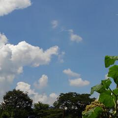 風景 畑の夏の空  夏の空の下に 大好きな百合…(1枚目)