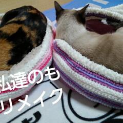 猫ベッド/にゃんこ同好会/姉妹/セリア/ハンドメイド しつこいけど、ベッドのリメイク  後から…