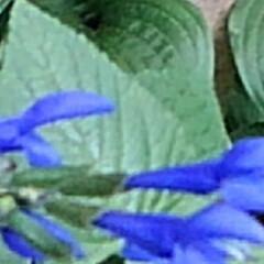 庭の夏の花/フォロー大歓迎/夏のお気に入り/写真/夏の花 庭に咲いている夏の花達(6枚目)