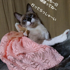 シャム/猫/フォロー大歓迎/朱色 おはようございます 金曜日の朝です  今…
