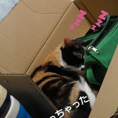 猫のいる生活/ねこ/にゃんこ同好会 毎度、 お馴染みの箱入り息子&娘  飽き…(3枚目)