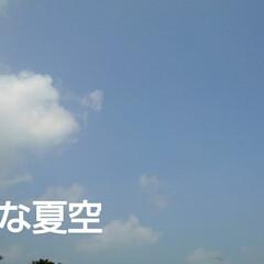 「綺麗な夏空と虫たち 」(1枚目)