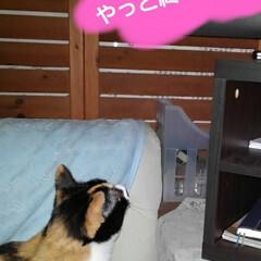 猫のいる生活/ねこ/にゃんこ日めくり 4月25日 日曜日だにゃん  僕と沙羅ち…(9枚目)