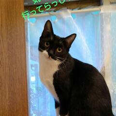 白黒猫/フォロー大歓迎 お早うございます 昨日と違い凄くいい天気…
