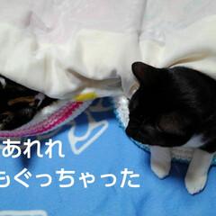 姉弟/にゃんこ同好会 お布団の横に 猫ベッドに入って寝たままの…(2枚目)