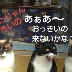 猫のいる生活/にゃんこ同好会/ねこ 今日は3️⃣ニャンズの ニャルソックが見…(9枚目)