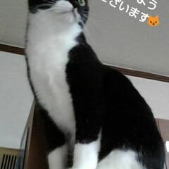 にゃんこ同好会/リミアペット同好会/白黒猫/フォロー大歓迎 おはようございます🐱 紗夢の日曜日  ご…