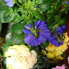 花のある暮らし/にゃんこ同好会 昨日は娘達から時間差攻撃で お花が届きま…(5枚目)