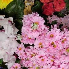 花のある暮らし/にゃんこ同好会 昨日は娘達から時間差攻撃で お花が届きま…(4枚目)