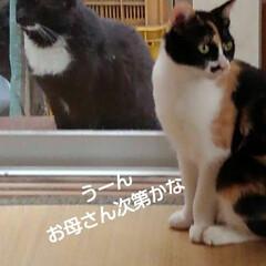 猫の気持ち/猫のいる柄が/にゃんこ日めくり おはようございます 5月11日 月曜日で…(3枚目)