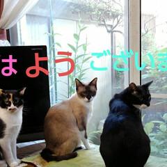 猫のいる暮らし/にゃんこ日めくり/にゃんこ同好会 おはようございます 8月20日 木曜日で…