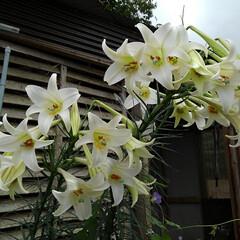 風景/花/畑/フォロー大歓迎/LIMIAおでかけ部/おでかけワンショット 畑の虫と花🌸  1枚目  グリーンの綺麗…(3枚目)