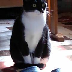 お見送り/白黒猫/にゃんこ同好会 おはようございます🐱 寒いけどいい天気の…