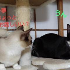 猫/姉弟/フォロー大歓迎 昨日の夜の事 瑠月と紗夢が 仲良く並んで…