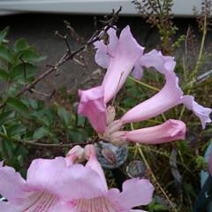 秋の花/お出かけ お出かけ先の 綺麗なピンクのお花と菊の花