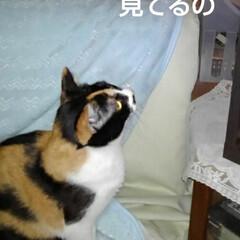 猫のいる生活/ねこ/にゃんこ日めくり 4月25日 日曜日だにゃん  僕と沙羅ち…(1枚目)