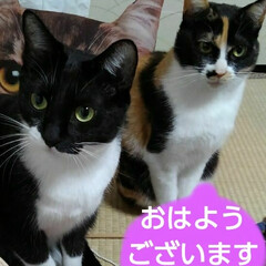 猫のいる生活/にゃんこ同好会/にゃんこ日めくり おはようございます いい天気の日曜日、5…