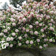 春の花 お出かけ先の春の花(4枚目)