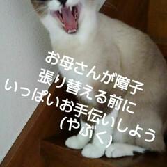 猫/にゃんこ同好会/ご挨拶/シャム猫/フォロー大歓迎 おはようございます🐱 日曜日です  今日…(3枚目)