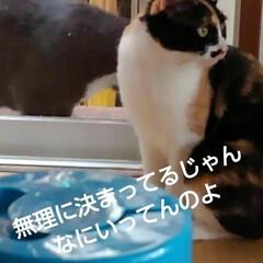 猫の気持ち/猫のいる柄が/にゃんこ日めくり おはようございます 5月11日 月曜日で…(6枚目)