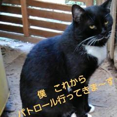 白黒猫/フォロー大歓迎 紗夢遥君もパトロールにお出かけ🐱