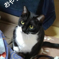 白黒猫/にゃんこ日めくり/にゃんこ同好会 おはようございます🐱 3月6日 金曜日で…(2枚目)