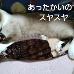猫のいる生活 るっちゃんのお昼寝(3枚目)