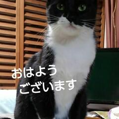 白黒猫/猫のいる生活/にゃんこ同好会/にゃんこ日めくり/猫の気持ち おはようございます 今日は曇り空  どん…