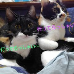 姉弟/ペット同好会 紗羅と紗夢のお見送り  今日も元気に 「…