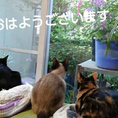 猫のいる生活/にゃんこ日めくり/にゃんこ同好会 おはようございます 5月3日 日曜日です…