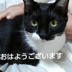 猫の気持ち/猫のいる生活/にゃんこ同好会/にゃんこ日めくり おはようございます🐱 6月19日 金曜日…