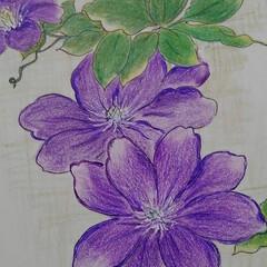 花のある暮らし/初夏 紫陽花やテッセン  初夏を彩る代表作とし…(2枚目)