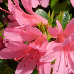 風景/花のある生活 お散歩してたらもう初夏並みの 景色になっ…(5枚目)