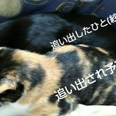 猫のいる生活 るっちゃんのお昼寝(2枚目)