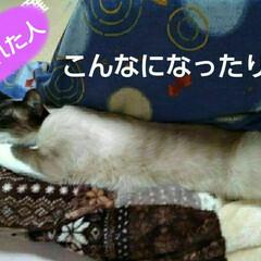 猫のいる生活 るっちゃんのお昼寝(4枚目)