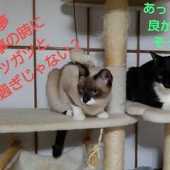 猫/姉弟/フォロー大歓迎 昨日の夜の事 瑠月と紗夢が 仲良く並んで…(5枚目)