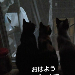 猫の気持ち/にゃんこ日めくり おはようございます🐱🐱🐱 7月23日 木…