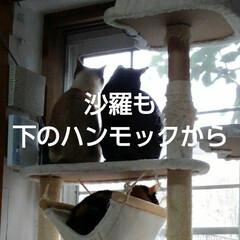 にゃんこ日めくり/三姉弟猫/ニャルソック おはようございます🐱 曇り時々晴れの朝 …(3枚目)